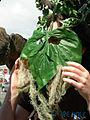 Fremont Fair 2007 pre-parade Ents 06.jpg