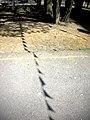Friend Call - panoramio.jpg