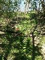 Fritillaria imperialis sl3.jpg