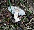 Fungi (39728487882).jpg
