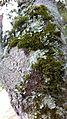 Fungos no tronco da árvores de Mata Cipó,derivação de Mata Atlântica-Ba.jpg
