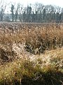 Furze Plantation - geograph.org.uk - 687184.jpg