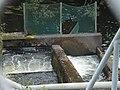 Görarpsdammens laxtrappa.jpg