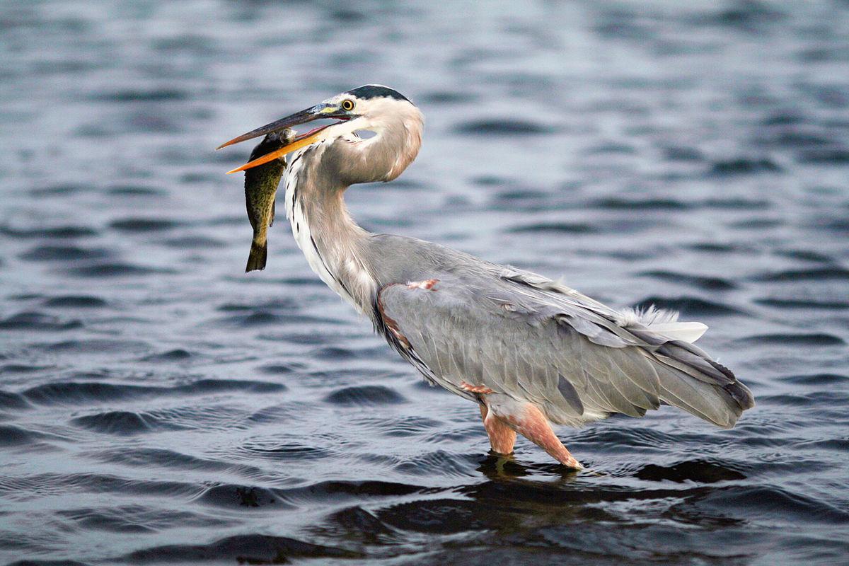 Dia de pesca - 2 2