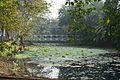 Garden Pond - Jadavpur University - Kolkata 2015-01-08 2349.JPG