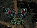 Garden d'Lights 2008 at the Bellevue Botanical Garden, img057.jpg