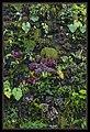 Gardens by the Marina Bay-112 (8358211181).jpg