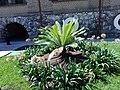 Gardens in Poliforum Mier y Pesado 04.jpg