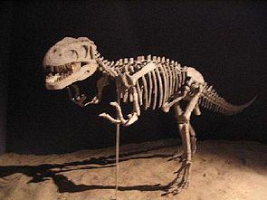 Gasosaurus, Skelettrekonstruktion