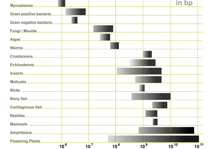 File:Genome Sizes.png