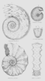 Geology and Mineralogy considered with reference to Natural Theology, plate 40.png