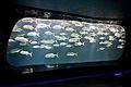 Georgia Aquarium (4662882411).jpg