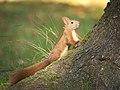 Getting on a tree (37496661352).jpg