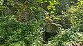 Geulhem-Vlaberggroeve (3).jpg