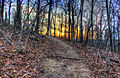 Gfp-arkansas-mount-magazine-state-park-sunset-behind-trees.jpg