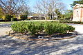 Goulburn Court House Rose Garden 001.JPG