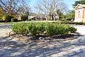 Goulburn Court House Rose Garden 001.JPG
