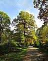 Grant tree. September 2015. - Красивый дуб. Сентябрь 2015. - panoramio.jpg