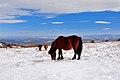 Grayson Highlands State Park Winter (7414957614) (2).jpg