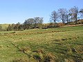 Grazing field near Binks - geograph.org.uk - 328328.jpg
