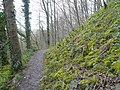 Great Shacklow Wood - Footpath - geograph.org.uk - 755116.jpg