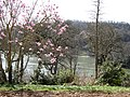 Greenway garden and River Dart - geograph.org.uk - 1206237.jpg