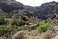 Guayadeque paisaje 3.jpg