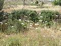 Hadassah Trail P1150416.JPG