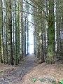 Hafod Lom woods - geograph.org.uk - 966205.jpg