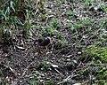 Hama-rikyu garden 3-23 (25778492823).jpg