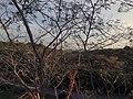 Hamajimacho Hazako, Shima, Mie Prefecture 517-0403, Japan - panoramio (2).jpg