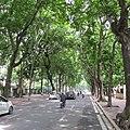 Hanoi shady street.jpg
