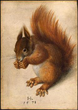 Un écureuil roux par Hans Hoffmann