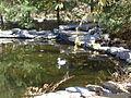 Harrison Crawford Obannon Woods duck pond.jpg