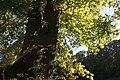 Harz Stecklenberg Wanderung Stecklenburg - Herbst - panoramio.jpg