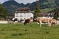 Haus Ceberg Schwyz www.f64.ch-1.jpg