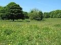 Hawthorn Dene, County Durham - geograph.org.uk - 1354793.jpg