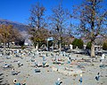 Hawthorne Cemetery gravestones, Nevada.jpg