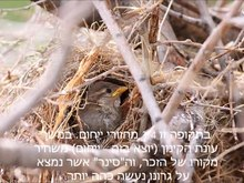 קובץ:He-house sparrow movie.ogv