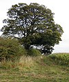 Hedgerow trees, Otby - geograph.org.uk - 1539545.jpg