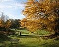Herbst im Rombergpark - panoramio.jpg