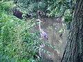Heron P8190013.jpg