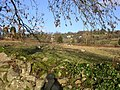 Hewelsfield Common - geograph.org.uk - 300537.jpg