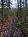 High Weald Landscape Trail, Mill Wood - geograph.org.uk - 335351.jpg