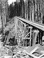 High railroad trestle through timber, Kerry Timber Company, Oregon, ca 1917 (KINSEY 2362).jpeg