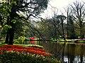 Holandia Keukenhof - panoramio (11).jpg
