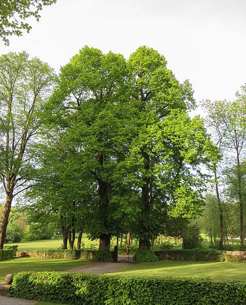 File:Horn-Bad Meinberg - 2015-05-10 - ND Linden Friedhof Leopoldstal.jpg