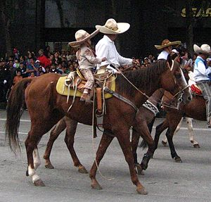 Vaquero - Modern child in Mexican parade wearing charro attire on horse outfitted in vaquero-derived equipment including wide, flat-horned saddle, bosalita and spade-type bit, carrying romal reins and reata