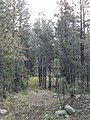 Horton Creek Trail, Payson, Arizona - panoramio (5).jpg