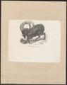 Ibex nubiana - 1700-1880 - Print - Iconographia Zoologica - Special Collections University of Amsterdam - UBA01 IZ21300177.tif